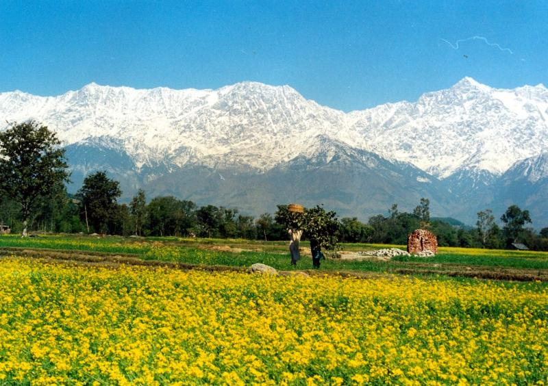 Himachal Valley of flowers with snow mountains