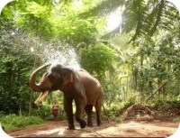 Elephant bathing in kerala