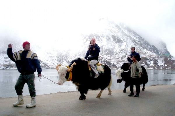 Yak riding in Gangtok, Sikkim
