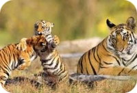 sunderban-tiger-package-tour