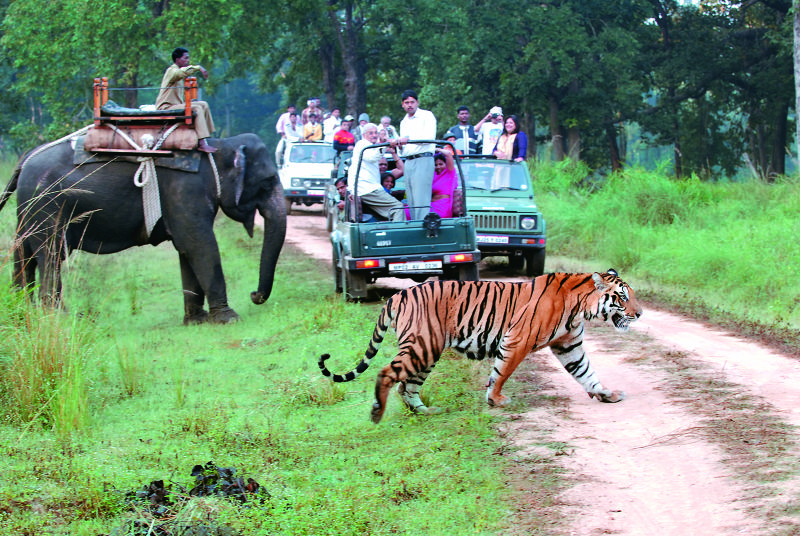 Tiger safari in Jim Corbett National Park